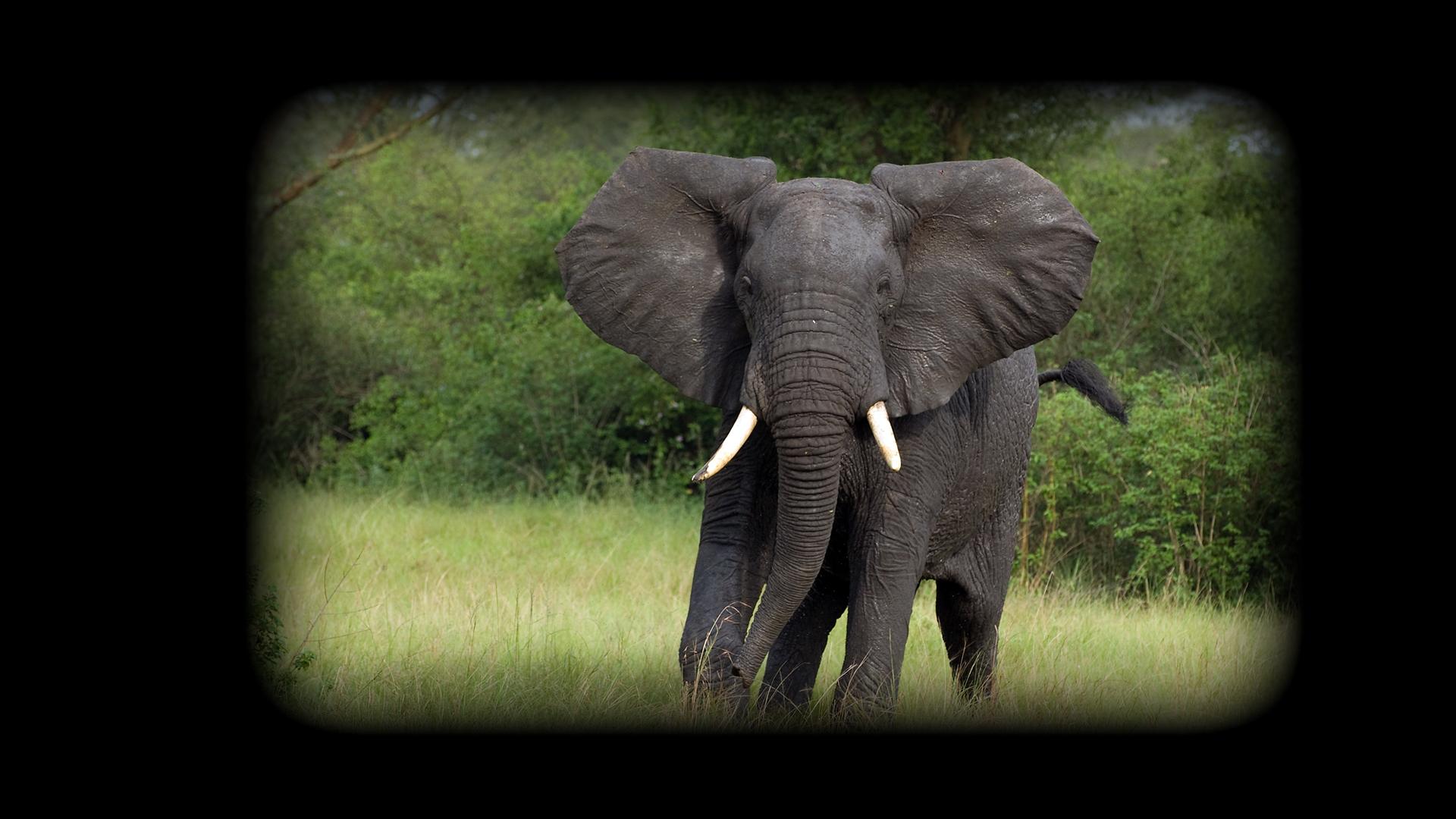 2007 Uganda