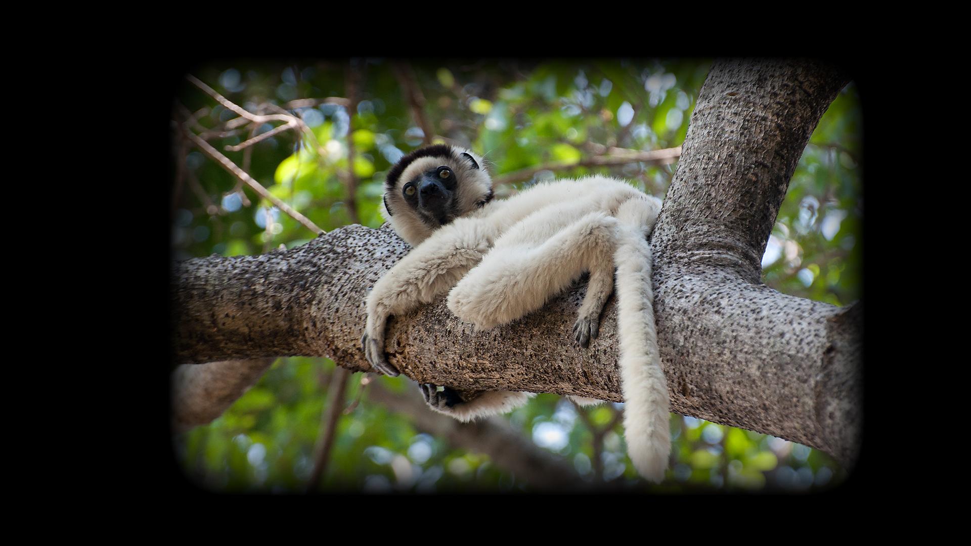 2010 Madagascar