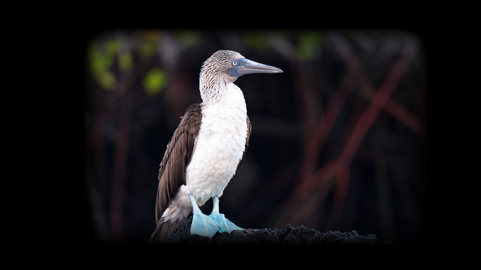 2016 Ecuador Galapagos