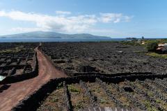Açores - Pico - Vineyards