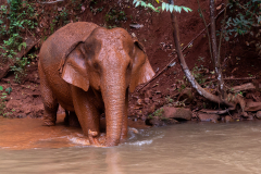 Mondulkiri - Elephant Valley Project
