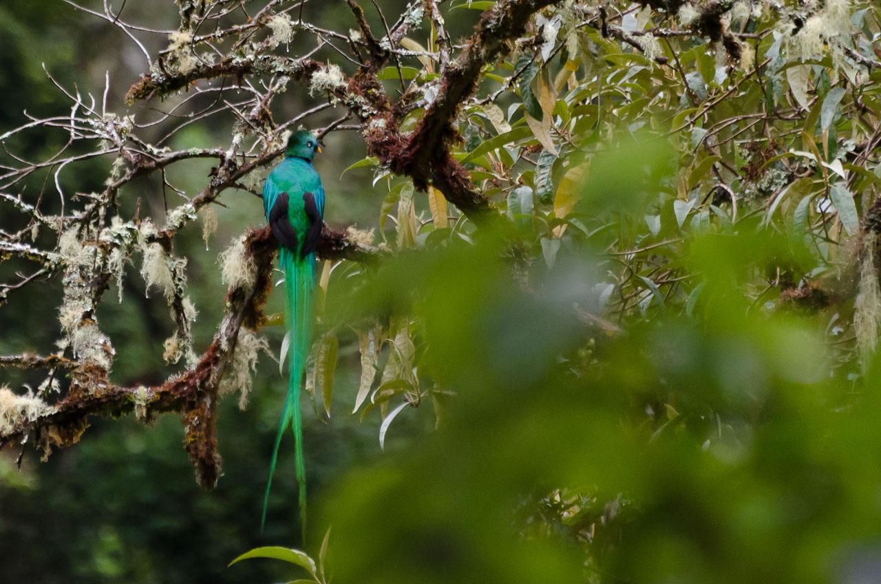 San Gerardo de Dota - Quetzal [m]