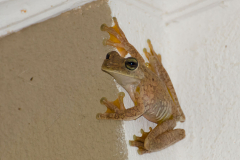 Vergel de Punta Mala -  Frog