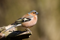 Drents-Friese Wold - Vink