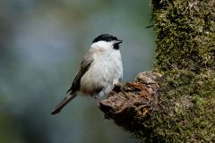 Goois Natuurreservaat - Glanskop