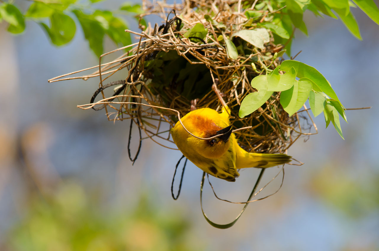 Mumbo Island - Weaver