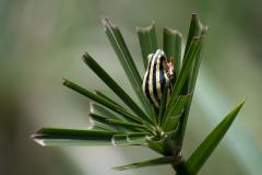 Mlilwane - Frog