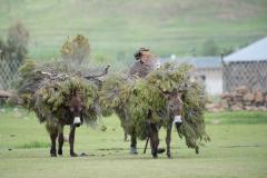 Lesotho - Semonkong