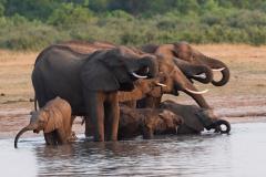 Hwange NP - Elephant
