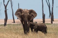 Matusadona NP = Elephant