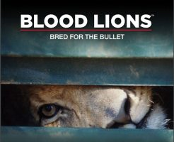 Blood Lions – A Call to Stop Canned Lion Hunting