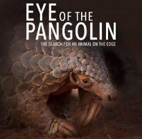 Pangolin.Africa – Eye of the Pangolin