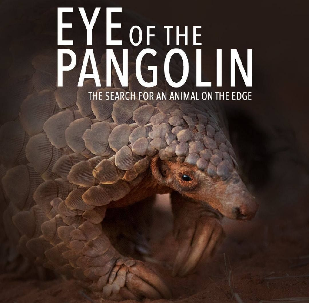 Pangolin.Africa – Eye of the Pangolin